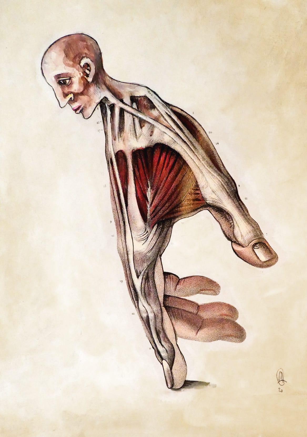 Dossier Peindre le corps : la morphologie